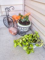 Potted plants and decorative miniature bicycle plant holder at the home facade