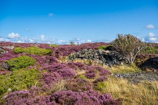Landschaft auf der Insel Dyrön in Schweden