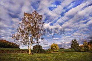 Birkenbaum im Herbst