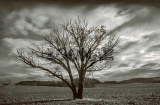 Der Baum im Feld