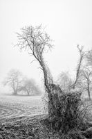Trees in winter with hoarfrost