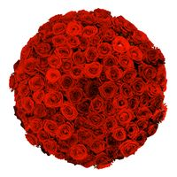 Red roses bouquet on white