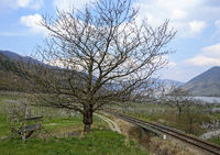 grafted fruit tree aside a railway track