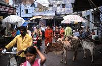 Agra, Indien, Strassenszene mit Menschen auf einem Markt und einer heiligen Kuh mit Kalb