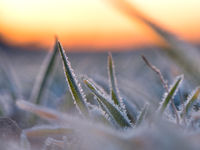 Grass on a winter morning