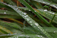 Close up raindrops or dew on green grass