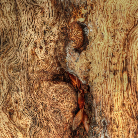 Wooden structure on an old tree trunk