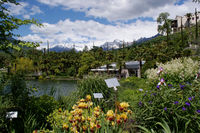 Flowers, palm trees, snow-capped mountains