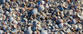 Natural background of broken seashells on beach at sunny summer day