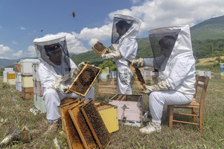 Beekeepers working to collect honey