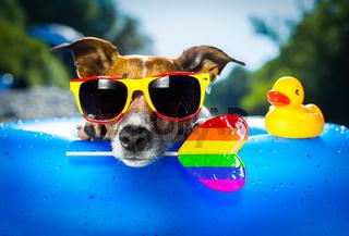 gay beach dog