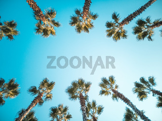Beautiful pattern of palm trees with blue sky