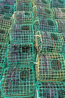 tintenfischfallen
