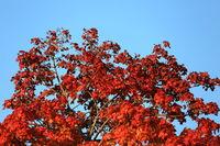 Autumn colors as background against blue sky