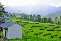 Living in the rice terraces in Flores Indonesia