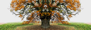 herbstlicher Baum auf dem Feld