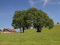 Tree Pair