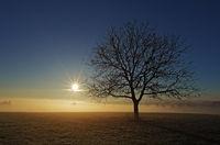 Sunrise over the sea of fog with tree
