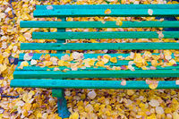 Bench autumn colorful leaves fall
