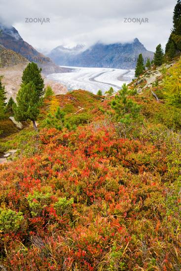 Aletsch Forest and Aletsch Glacier, Switzerland