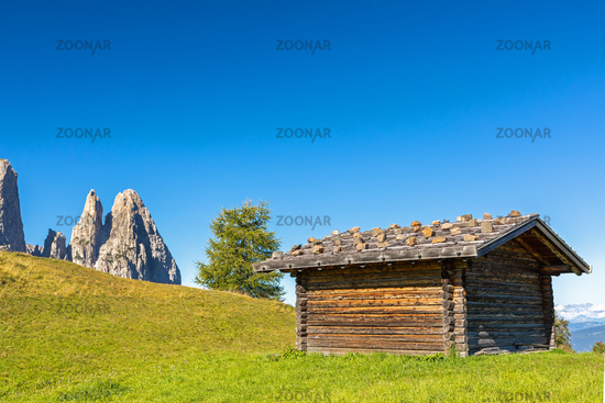 On Seiser Alm, Alpe di Siusi, with a view of Schlern mountain, Sciliar, South Tyrol