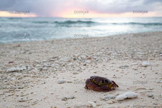 Dead crab on a beach