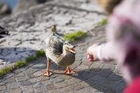 Girl Feeding a Duck