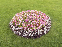 flowerbed with different colors in the middle of the lawn