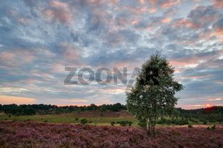 Lueneburger Heide bei Sonnenaufgang