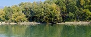 Auwald am Ufer der Donau in der Wachau