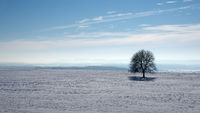 Tree soloist in winter landscape