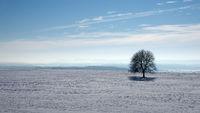 Tree soloist in winter landscape