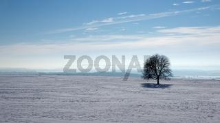 Baumsolist in Winterlandschaft