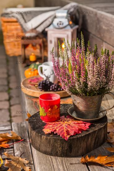 Autumn garden decoration on terrace and patio with pumpkins and heather plants  (Calluna vulgaris)