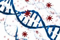 Virus integrates into the human cellular mechanism.
