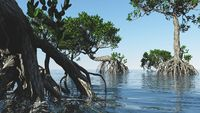 Red mangroves on Florida coast 3d rendering