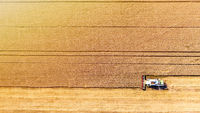 Combine harvester gathers grain on a wheat field, top view. Harvest time. Aerial drone view