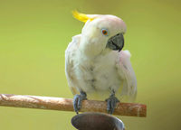 Cute white parrot on a branch