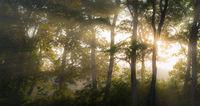 Sun rays shine through the autumn forest