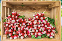 Display of fresh raw red radishes for sale at local farmer's mar