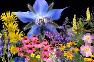 Heilpflanzenarrangement, Heilpflanzen, verschiedene