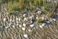 Wadden Sea,Germany
