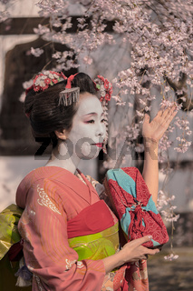 Maiko in a kimono posing in front of a traditional Japanese house surrounded by cherry blossoms.