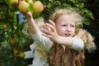 Kinder ernten Äpfel im Garten