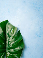 Monstera leaf on blue background