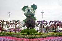 Miracle Gardens, Mickey Mouse made of flowers. Dubai, United Arab Emirates