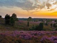 Blick vom Wilseder Berg zur Heideblüte bei Sonnenuntergang, Lüneburger Heide, Niedersachsen, Deutschland