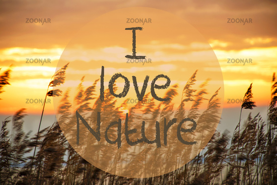Beach Grass At Sunrise Or Sunset, Text I Love Nature