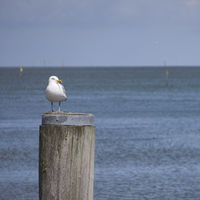 hoernum harbour at sylt island, germany