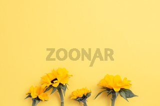Yellow sunflowers on yellow background. top view, copy space
